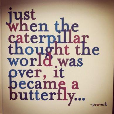 butterbly-catterpillar