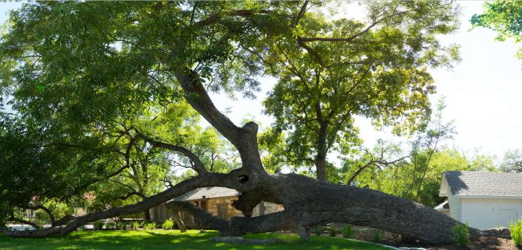 Stagecoach+Tree