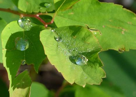 rain-drops-123016_960_720