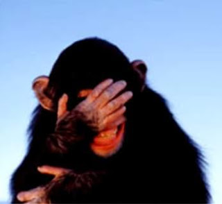 embarrassed_chimpanzee
