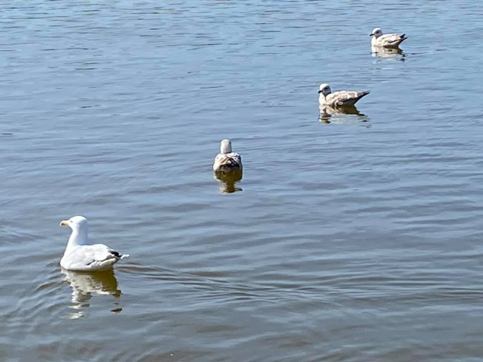 A flock of seagulls standing next to a body of water  Description automatically generated